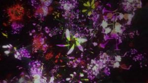 花がプラネタリウムの星のように降り注いできます
